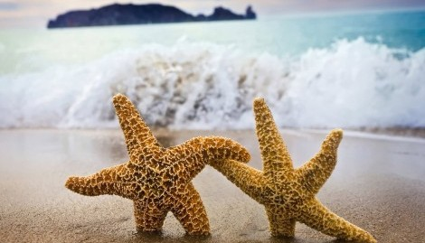 Starfish couple on the beach